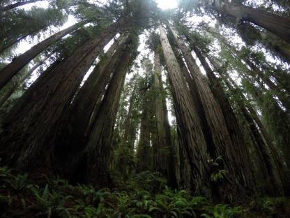 Redwood, USA